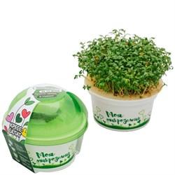 Набор для выращивания «Моя микрозелень» стакан - Кресс - салат - фото 10184