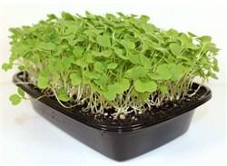 Руккола семена для проращивания микрозелени и беби зелени, 100г - фото 10857