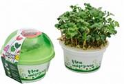 Набор для выращивания «Моя микрозелень» стакан - Редис