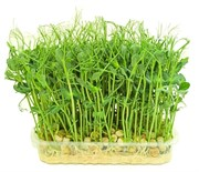 Горох зеленый (Мадрас) для проращивания микрозелени, 200г